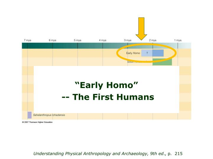 """Early Homo"""