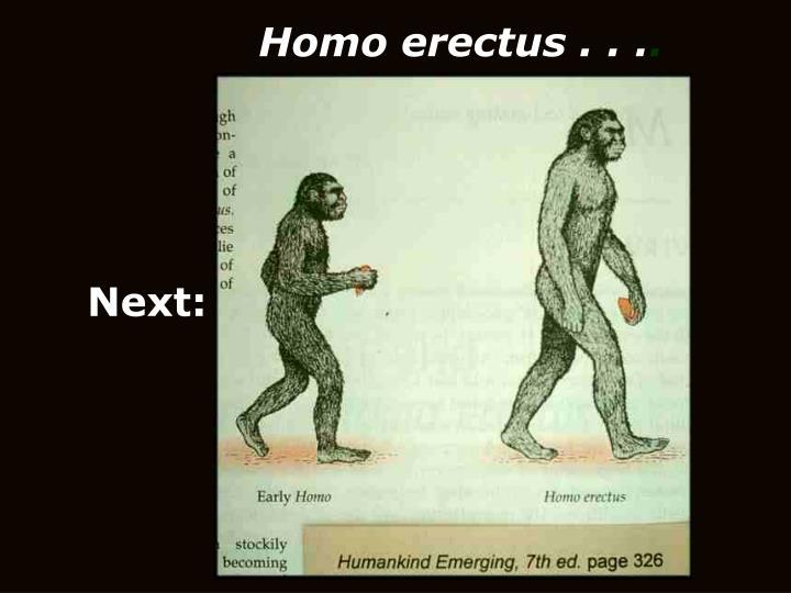 Homo erectus . . .