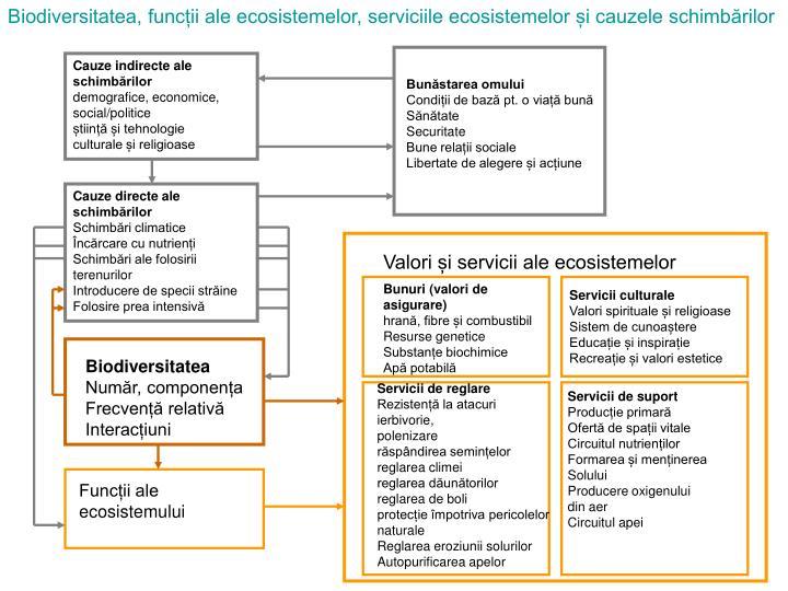 Biodiversitatea, funcții ale ecosistemelor, serviciile ecosistemelor și cauzele schimbărilor