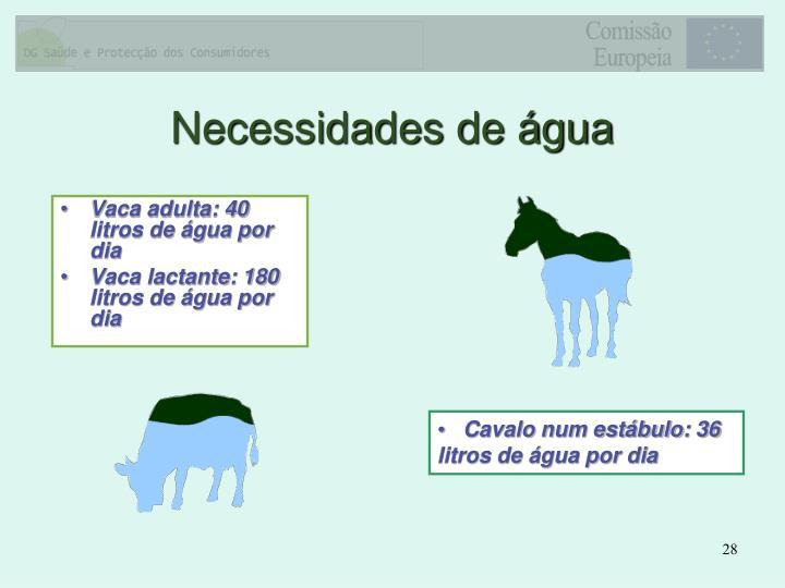 Vaca adulta: 40 litros de água por dia