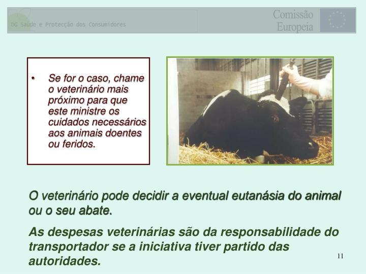 Se for o caso, chame o veterinário mais próximo para que este ministre os cuidados necessários aos animais doentes ou feridos.