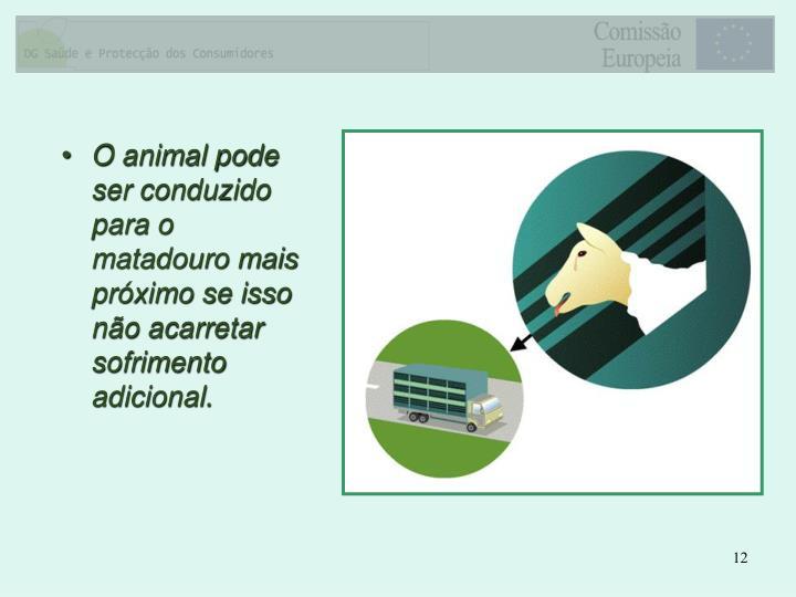 O animal pode ser conduzido para o matadouro mais próximo se isso não acarretar sofrimento adicional.