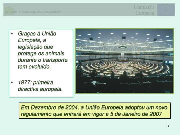 Graças à União Europeia, a legislação que protege os animais durante o transporte tem evoluído.