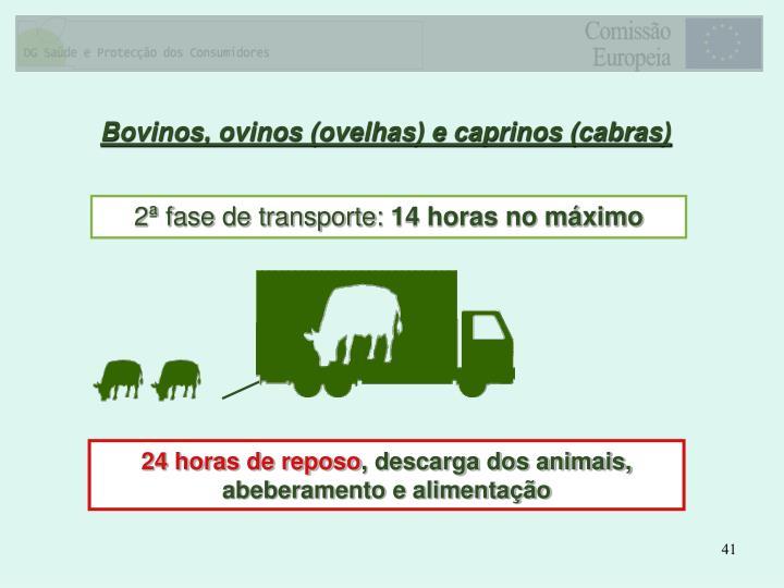 Bovinos, ovinos (ovelhas) e caprinos (cabras)