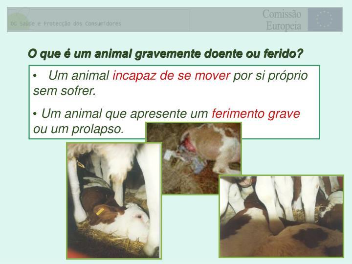 O que é um animal gravemente doente ou ferido?