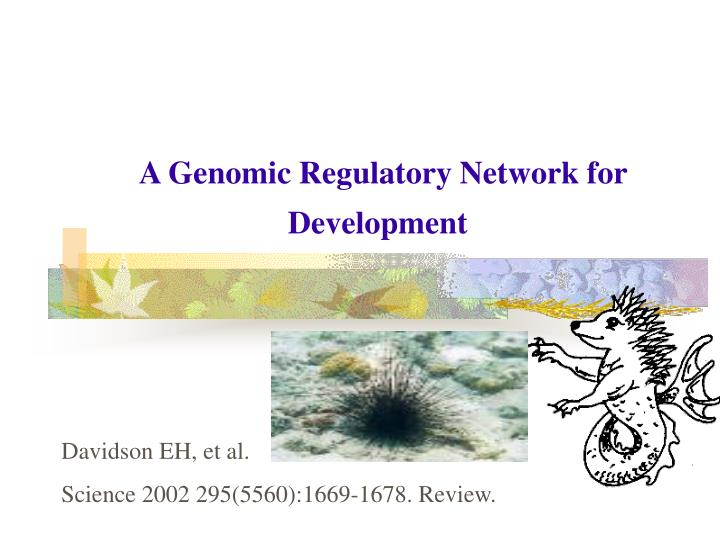 A Genomic Regulatory Network for Development
