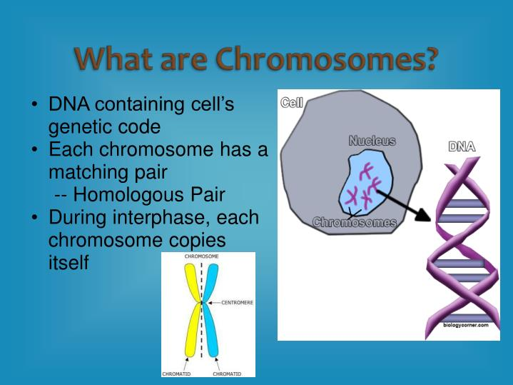 DNA containing cell's genetic code