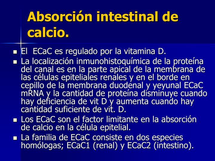 Absorción intestinal de calcio.