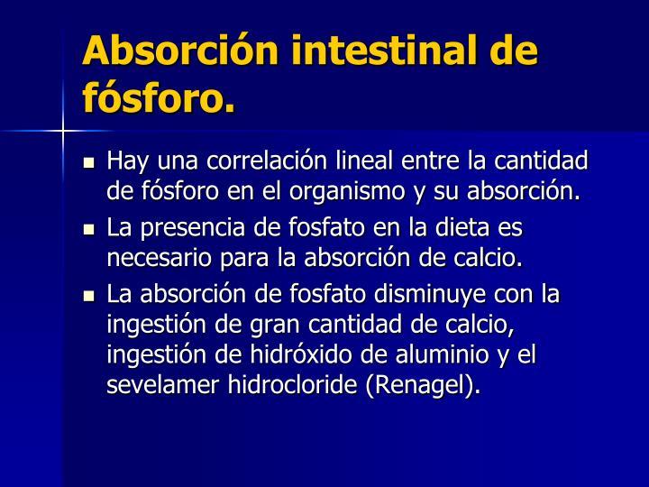 Absorción intestinal de fósforo.