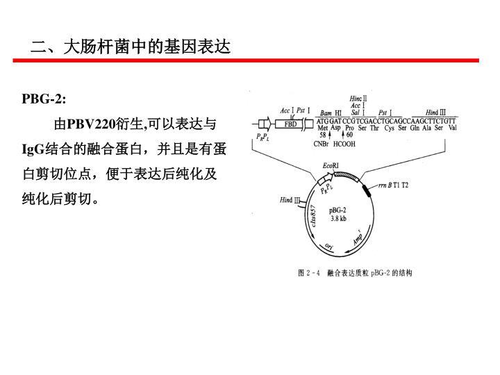 二、大肠杆菌中的基因表达