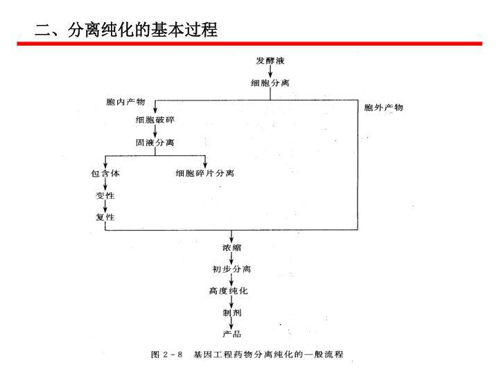 二、分离纯化的基本过程