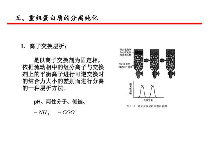五、重组蛋白质的分离纯化