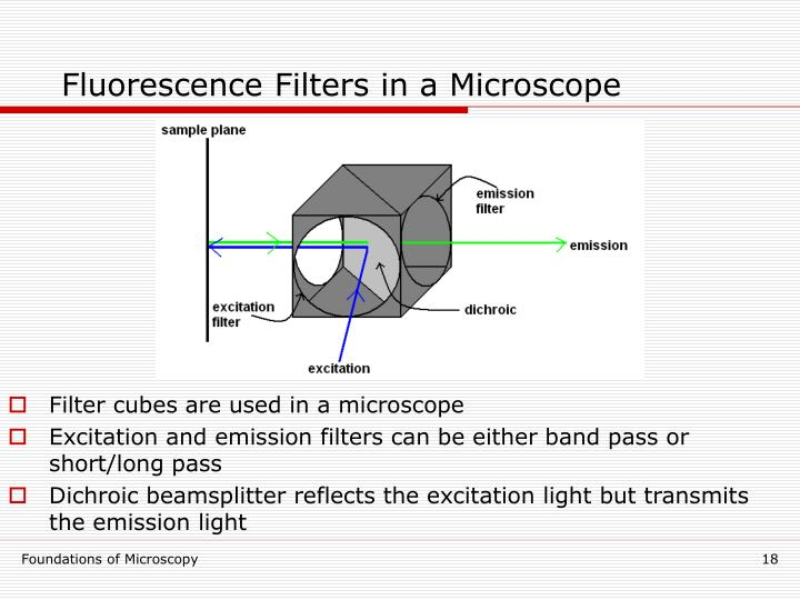 Fluorescence Filters in a Microscope