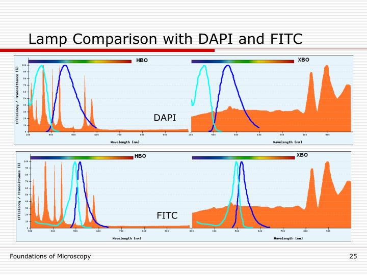 Lamp Comparison with DAPI and FITC