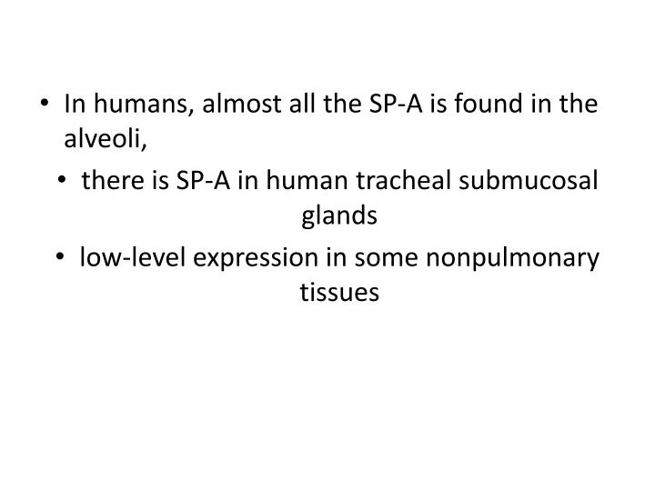 In humans, almost all the SP-A is found in the alveoli,