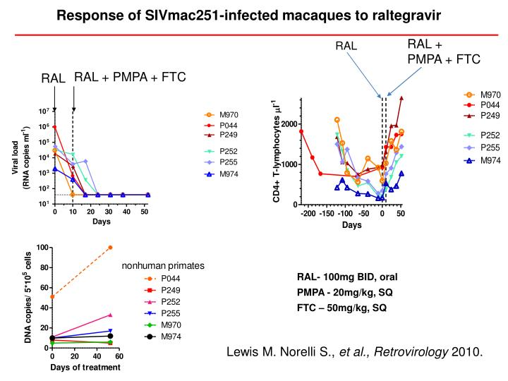 Response of SIVmac251-infected macaques to raltegravir