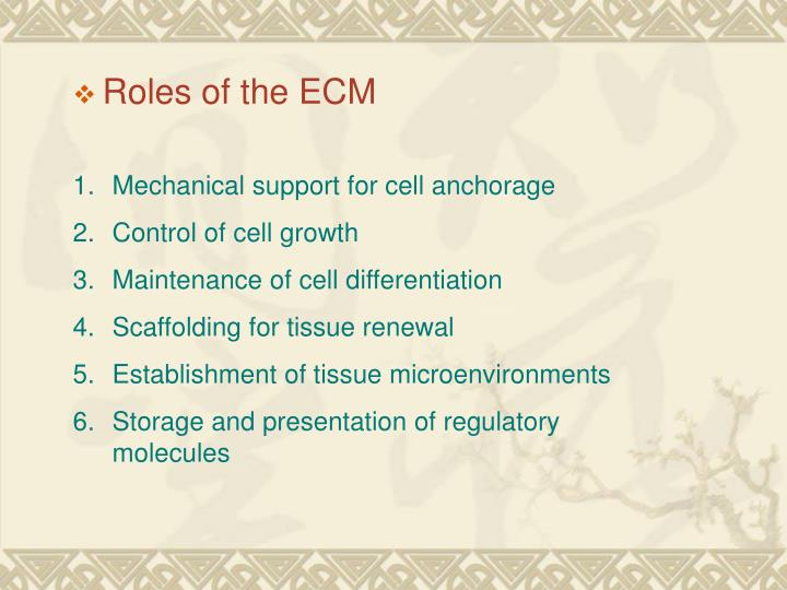Roles of the ECM