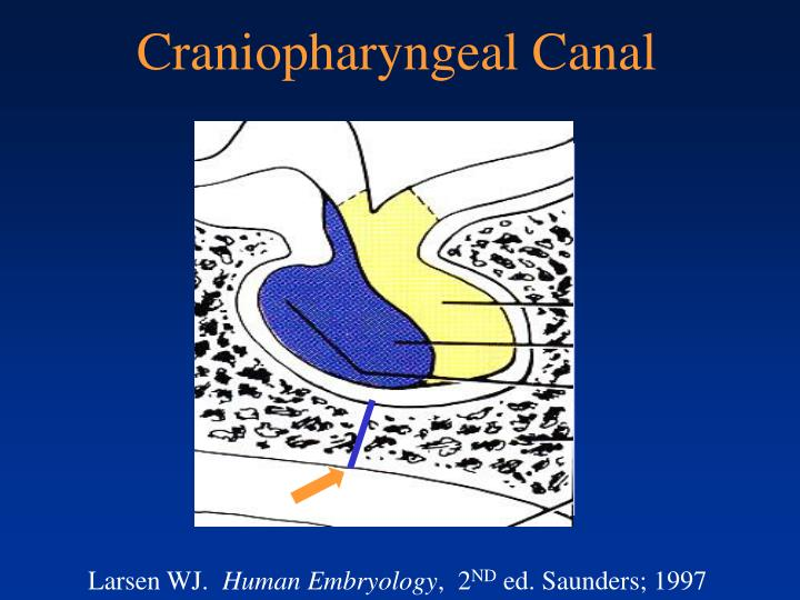 Craniopharyngeal Canal