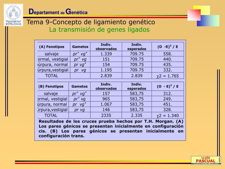 Resultados de los cruces prueba hechos por T.H. Morgan. (A) Los pares génicos se presentan inicialmente en configuración cis. (B) Los pares génicos se presentan inicialmente en configuración trans