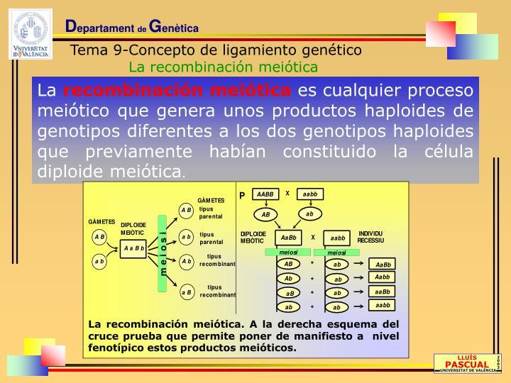 La recombinación meiótica