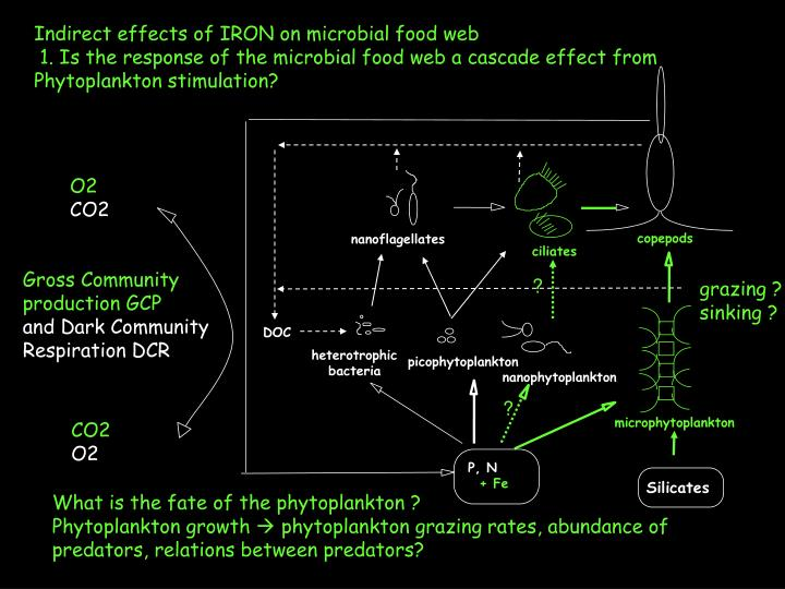 Indirect effects of IRON on microbial food web