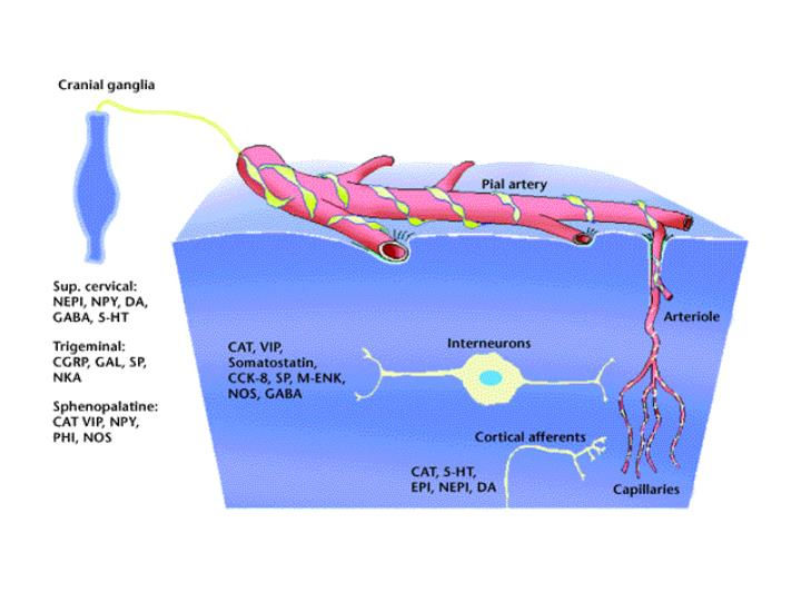 Neuronal Control of the Microcirculation
