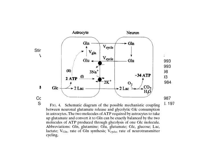 Sibson et al. PNAS, 1998