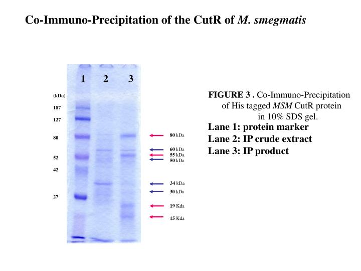 Co-Immuno-Precipitation of the CutR of