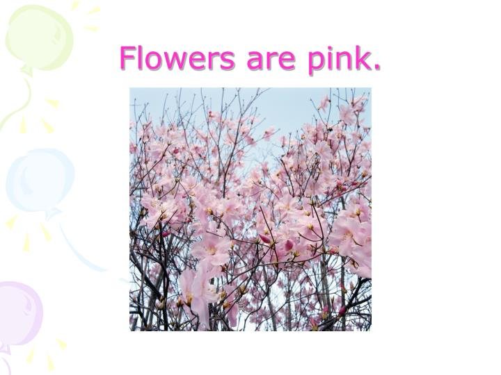Flowers are pink.