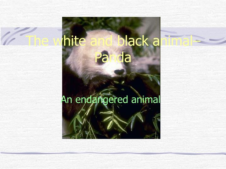The white and black animal panda