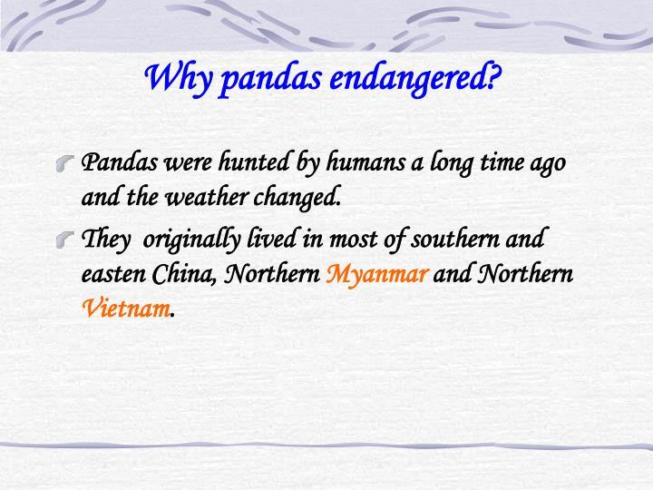 Why pandas endangered?