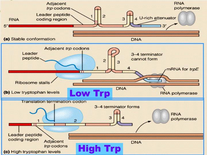Low Trp