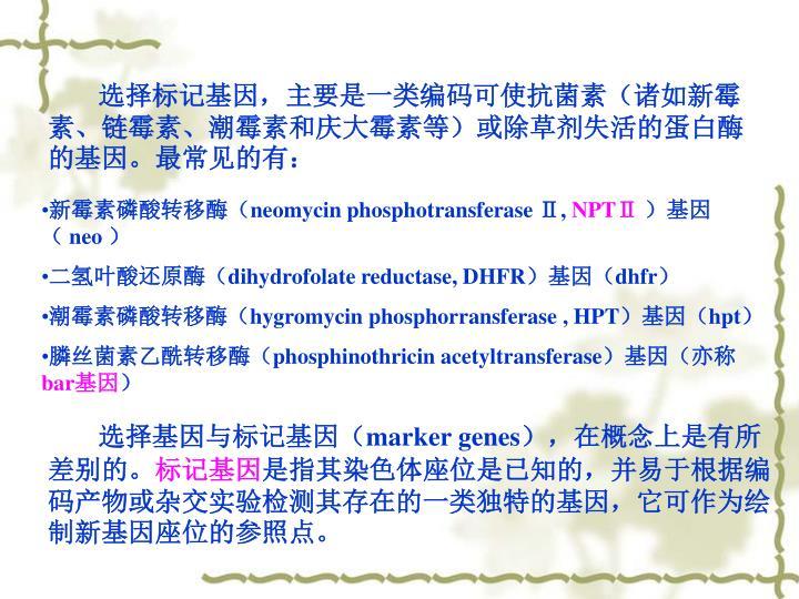 选择标记基因,主要是一类编码可使抗菌素(诸如新霉素、链霉素、潮霉素和庆大霉素等)或除草剂失活的蛋白酶的基因。最常见的有: