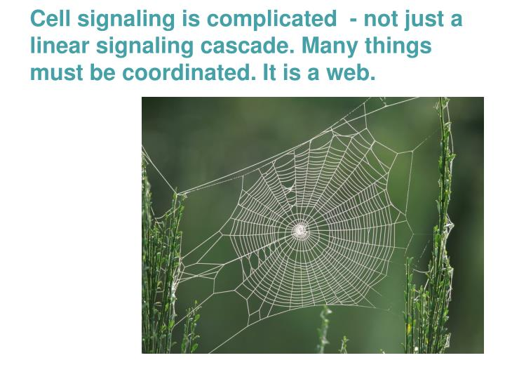 Cell signaling is complicated  - not just a linear signaling cascade. Many things must be coordinated. It is a web.