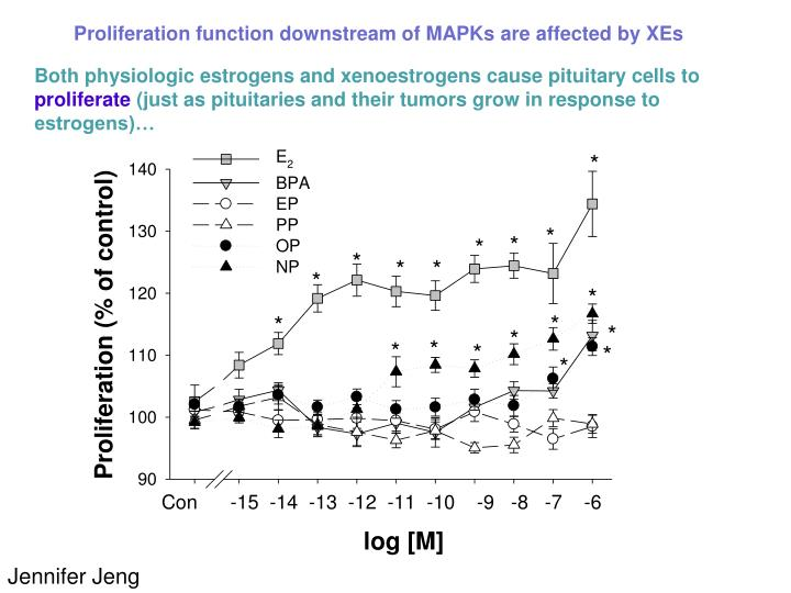 Proliferation function downstream of MAPKs are affected by XEs