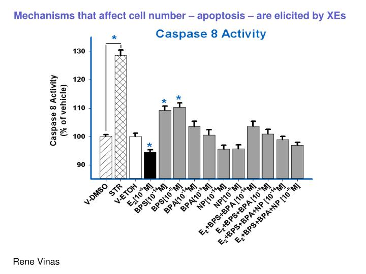 Mechanisms that affect cell number – apoptosis – are elicited by XEs