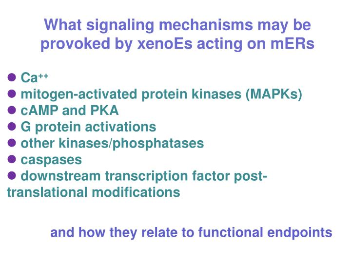 What signaling mechanisms may be provoked by xenoEs acting on mERs