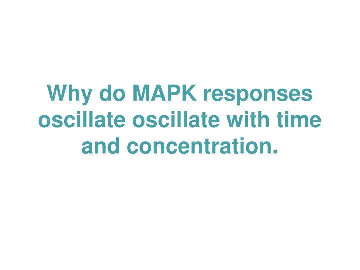 Why do MAPK responses oscillate oscillate with time and concentration.