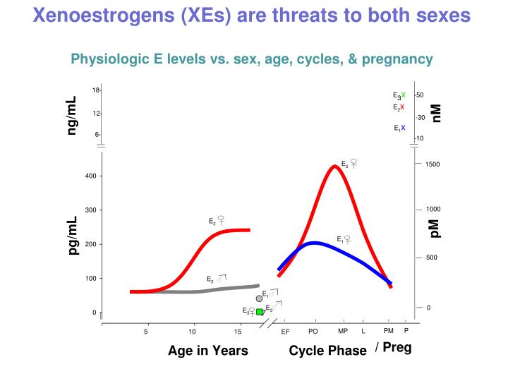 Xenoestrogens xes are threats to both sexes physiologic e levels vs sex age cycles pregnancy