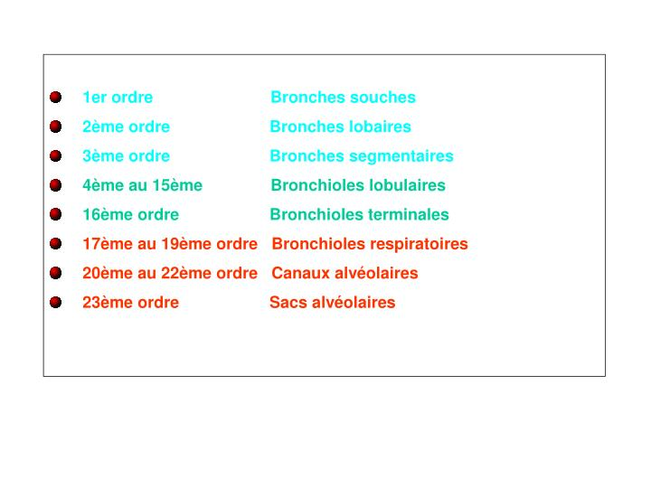 1er ordre                          Bronches souches