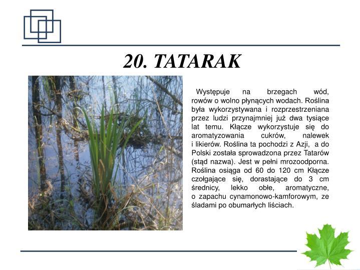 20. TATARAK