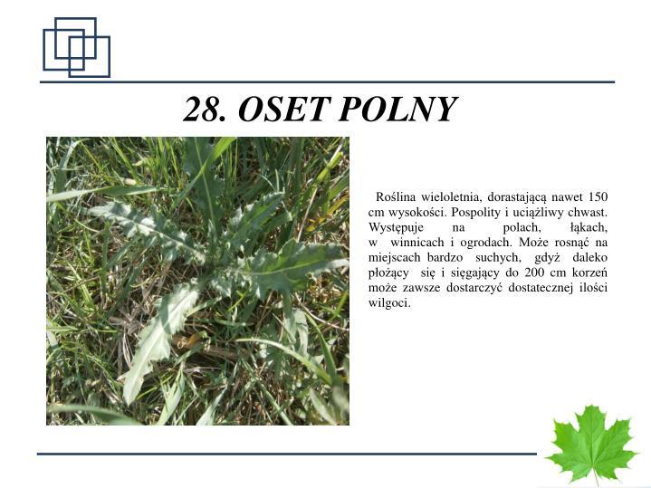 28. OSET POLNY