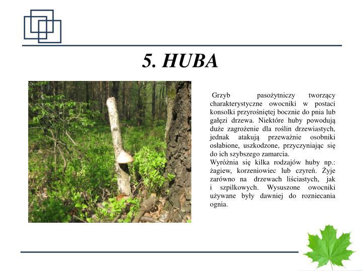 5. HUBA