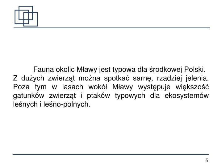 Fauna okolic Mławy jest typowa dla środkowej Polski.