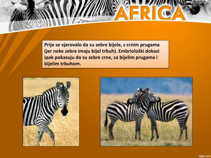 Prije se vjerovalo da su zebre bijele, s crnim prugama (jer neke zebre imaju bijel trbuh). Embriološki dokazi ipak pokazuju da su zebre crne, sa bijelim prugama i bijelim trbuhom.
