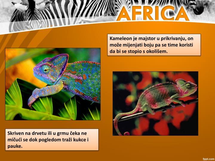 Kameleon je majstor u prikrivanju, on može mijenjati boju pa se time koristi da bi se stopio s okolišem.