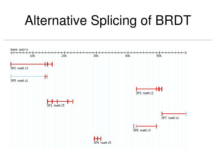 Alternative Splicing of BRDT