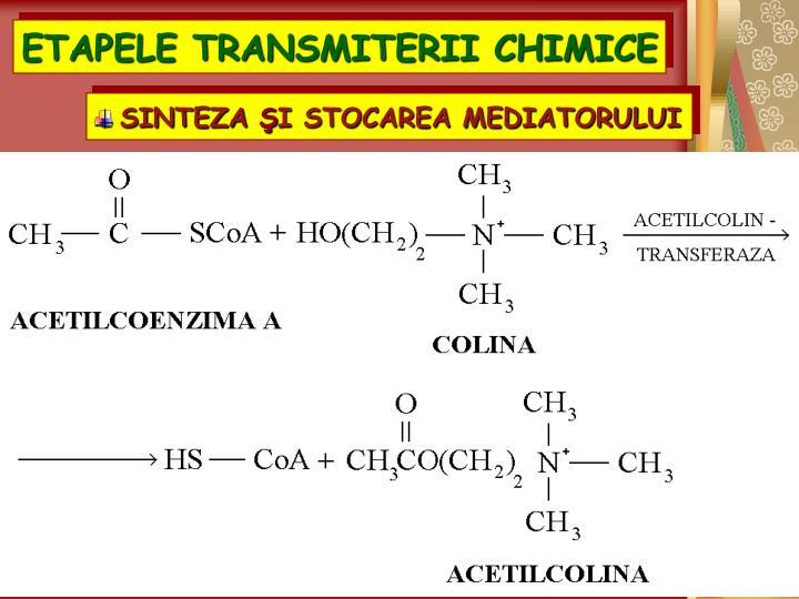 ETAPELE TRANSMITERII CHIMICE