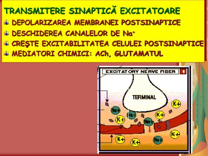 TRANSMITERE SINAPTIC