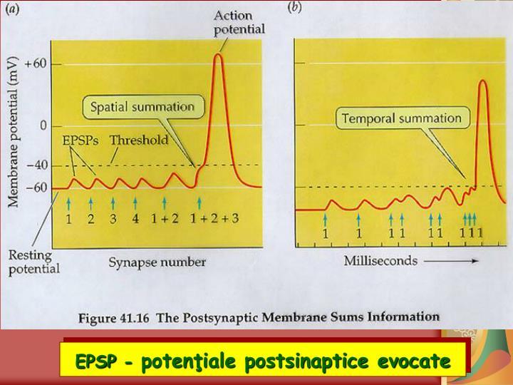 EPSP -